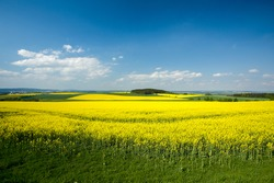 Beautiful spring rural landscape with rape field and blue sky