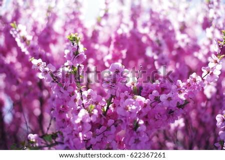 Beautiful Spring season flower, blossom, bloom. Fresh nature #622367261