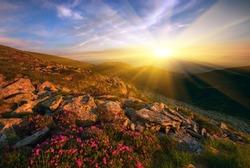 beautiful spring  sunrise landscape with blossom rhododendron flowers, Europe mountains, Carpathian national park, west Ukraine,  best travel, wonderful world