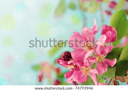 Beautiful spring tree blossoms against a blue background with copy space.