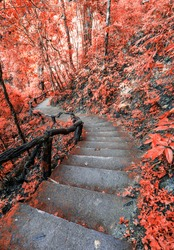 Beautiful Stair way in forest autumn season