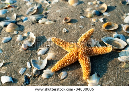 beautiful starfish