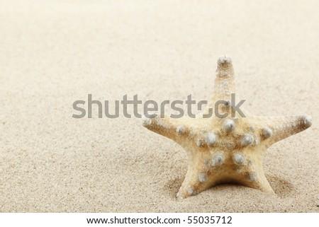 Beautiful starfish on bright sand beach.