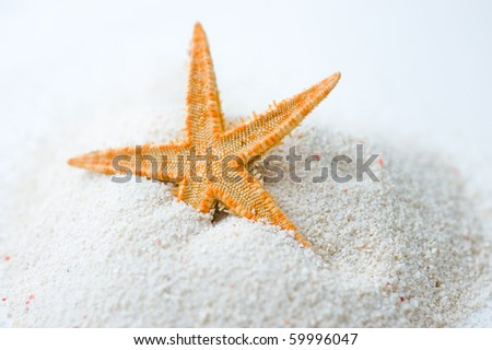 Beautiful starfish on bright white sand.