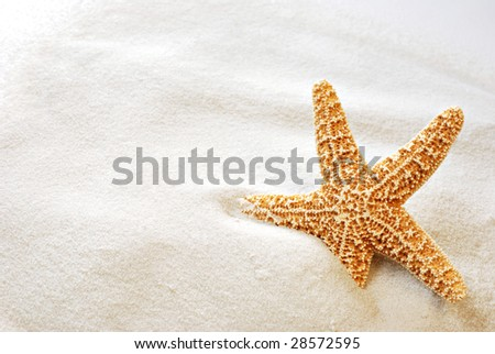 Beautiful starfish on bright white sand.  Macro with copy space included. #28572595