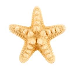 Beautiful starfish on white background. Beach object.