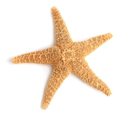 Beautiful starfish on white background, top view. Beach object
