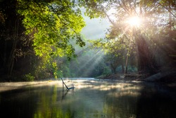 Beautiful  steam green forest nature. with sun ray through branches of trees
