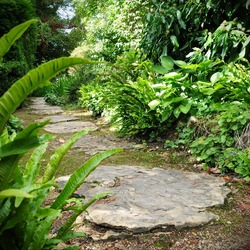 Beautiful Stepping Stone Path through a Green Leafy Garden