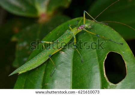 beautiful stick insect found in the forest of Borneo #621610073