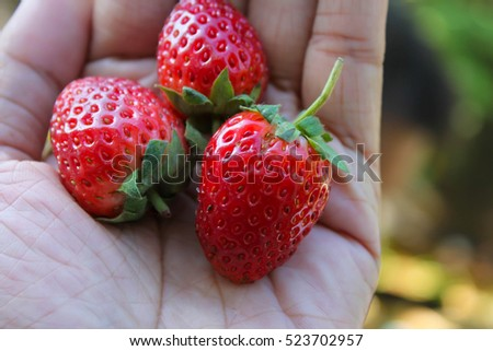 Beautiful strawberry growers on hand. #523702957