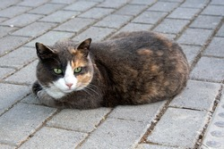 beautiful stray cat laying on the pavement , in Athens, Greece