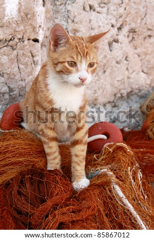 Beautiful stray ginger and white cat on fishing nets Dubrovnik harbor Croatia