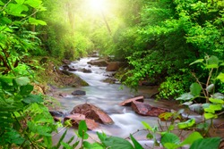 Beautiful stream flowing through a green forest, framed by vibrant foliage, with sun rays illuminating the scene from above
