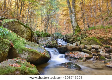 Beautiful stream in mountain the forest