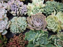 Beautiful succulent plant arrangement background.