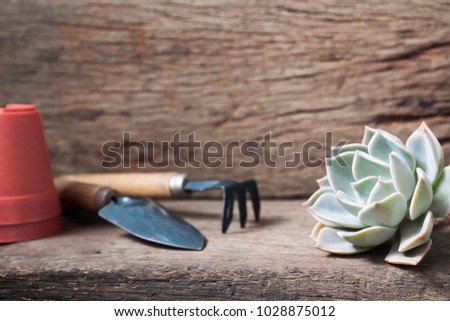 Beautiful succulent with garden tools on wooden table #1028875012