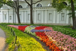 Beautiful summer flower beds in the city park of St. Petersburg on Elagin Island. Cozy urban environment. Garden and park landscape