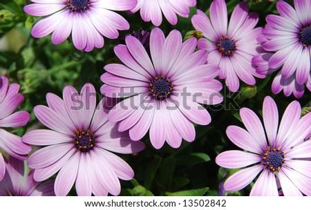 Beautiful summer flowers close up