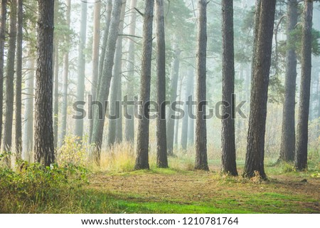 Beautiful summer forest with different trees in morning fog