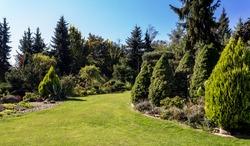 Beautiful summer garden design, with conifer trees, green grass and morning sun. Cut grass, Professional luxury gardening concept.