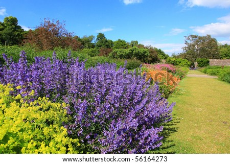 Beautiful summer garden with lavender