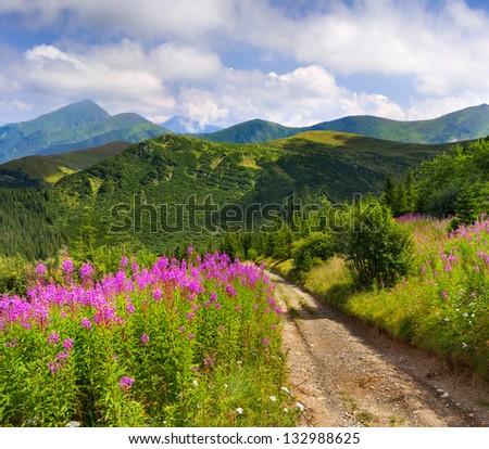 Beautiful summer landscape in the Carpathian mountains. Ukraine, Europe.