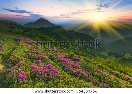 beautiful summer landscape in the mountains, Carpathian sunrise morning in rays rise sun, wonderful world - Shutterstock ID 564553756