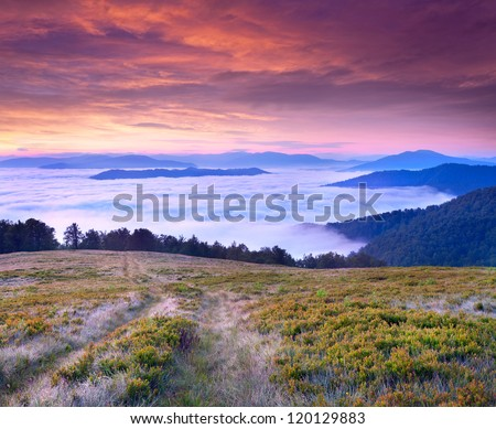 Beautiful summer landscape in the mountains. Sunrise  with clouds under the feet