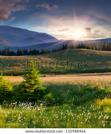 Beautiful summer landscape in the  mountains with a feather grass #132988466