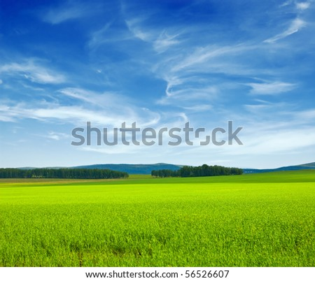 Beautiful summer landscape. Sky and grass. #56526607
