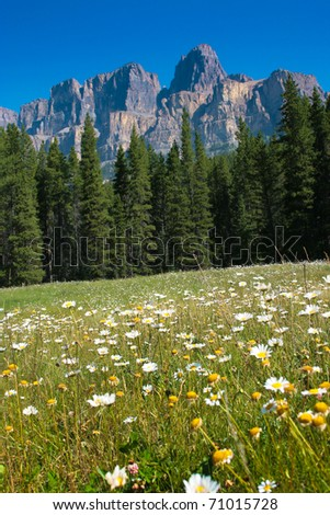 Beautiful summer landscape with Castle Mountain in the background in Jasper National Park, Alberta, Canada