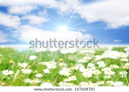 Beautiful summer landscape with daisies in the field