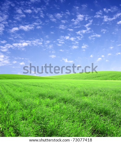 Beautiful summer landscape with green field and blue sky