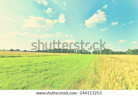 Beautiful summer landscape with green grass and blue cloudy sky