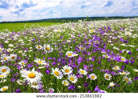 beautiful summer landscape with the blossoming meadow with flowers