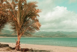 Beautiful summer landscapes  on the tropical beach