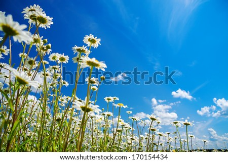 Beautiful Summer Rural Landscape With A Blossoming Meadow And The Blue Sky