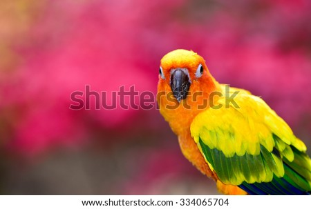 Beautiful Sun Conure. Parrot #334065704