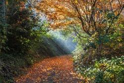 Beautiful sun rays falling on a golden empty footpath. Fall moody image