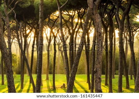 Beautiful sun rays in the morning forest