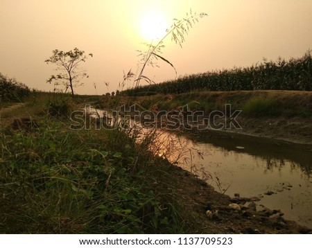 beautiful sun set at rural area near to forest #1137709523