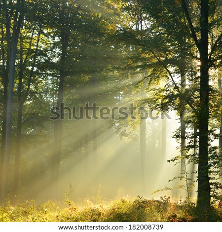 Beautiful sunbeams in green forest