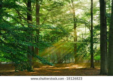 Beautiful sunbeams in the forest.