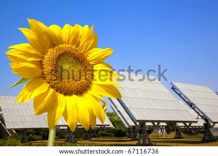 Beautiful sunflower and solar panel and power plant.Alternative energy concept