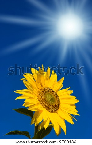 beautiful sunflower with blue sky stock photo 9700186   shutterstock
