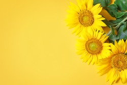 Beautiful sunflowers on yellow background.View from above. Background with copy space.