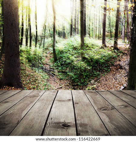 Beautiful sunlight in the autumn forest and wooden planks. Beauty nature background
