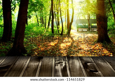 Beautiful sunlight in the autumn forest with wood planks floor