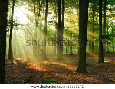 Beautiful sunlight in the forest.